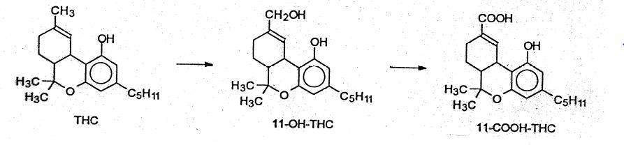 Figure 1 - Metabolism of Tetrahydrocannabinol (THC)
